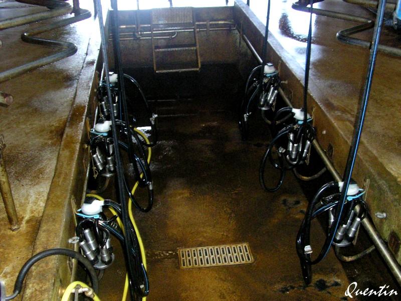 Salles de traite - Robots de traite P1010911