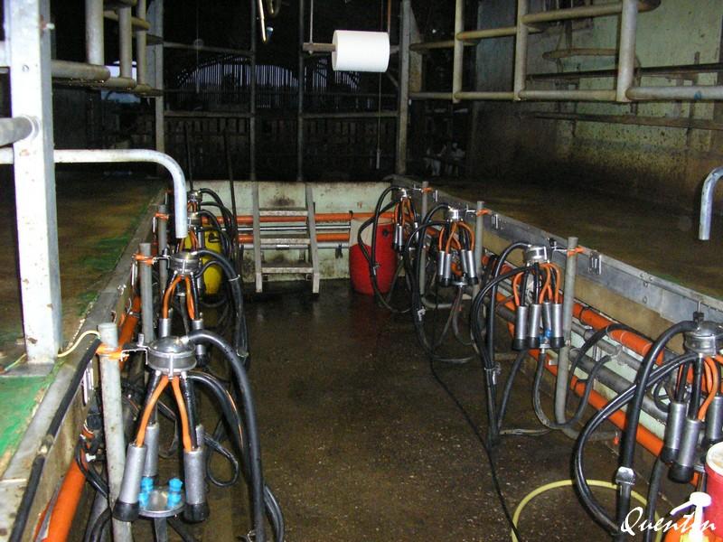 Salles de traite - Robots de traite P1010912