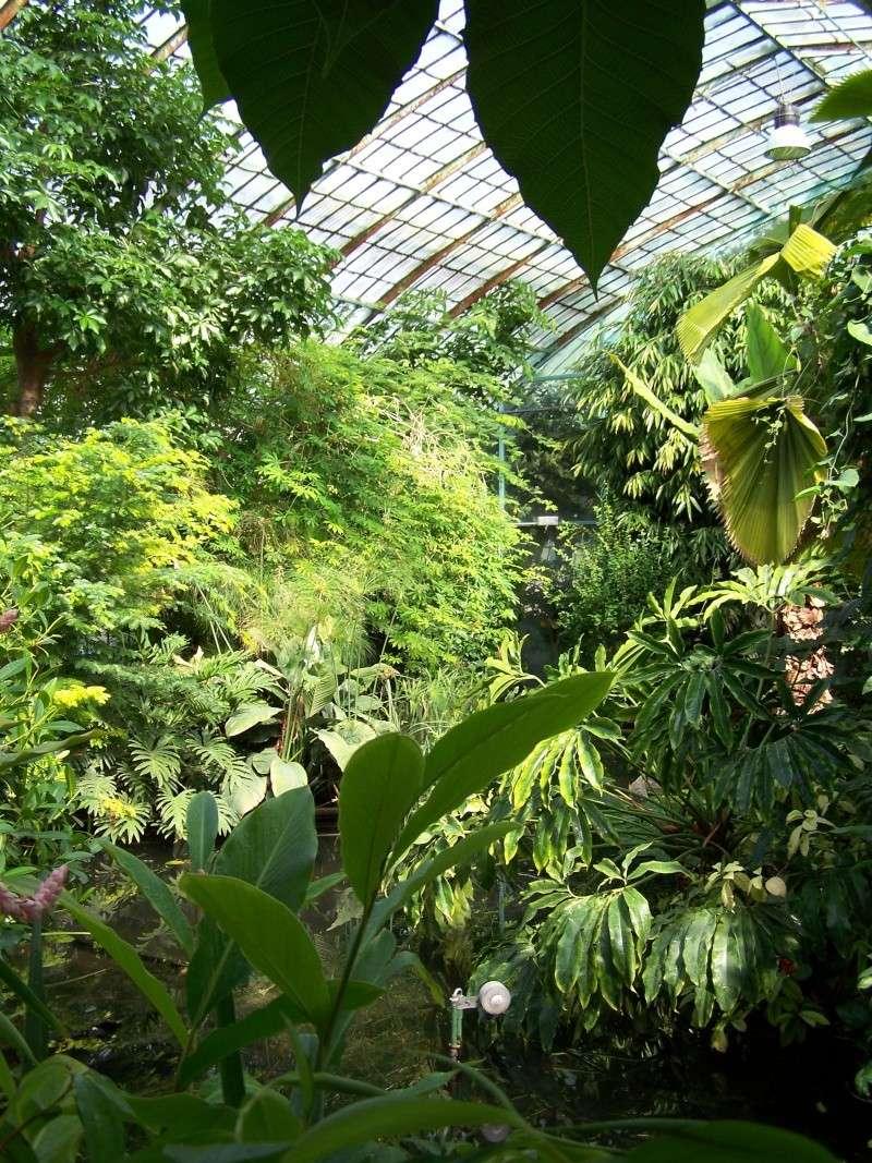 Quelques photos de notre palmarium Palmar10