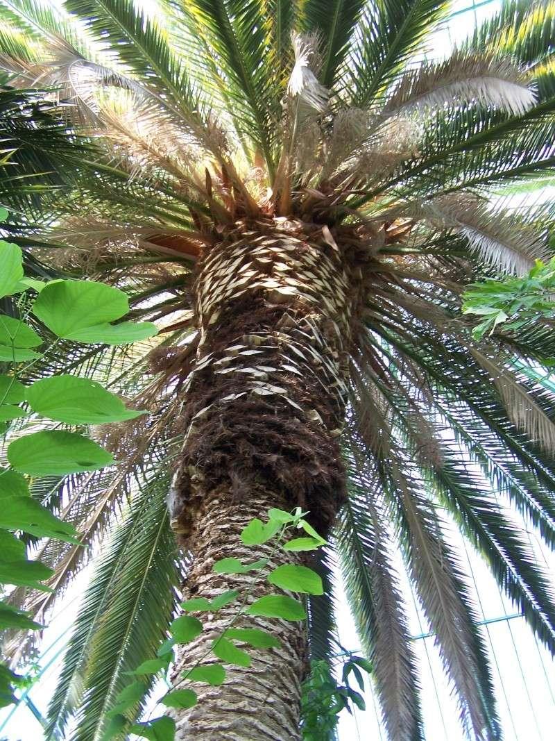 Quelques photos de notre palmarium Palmar11