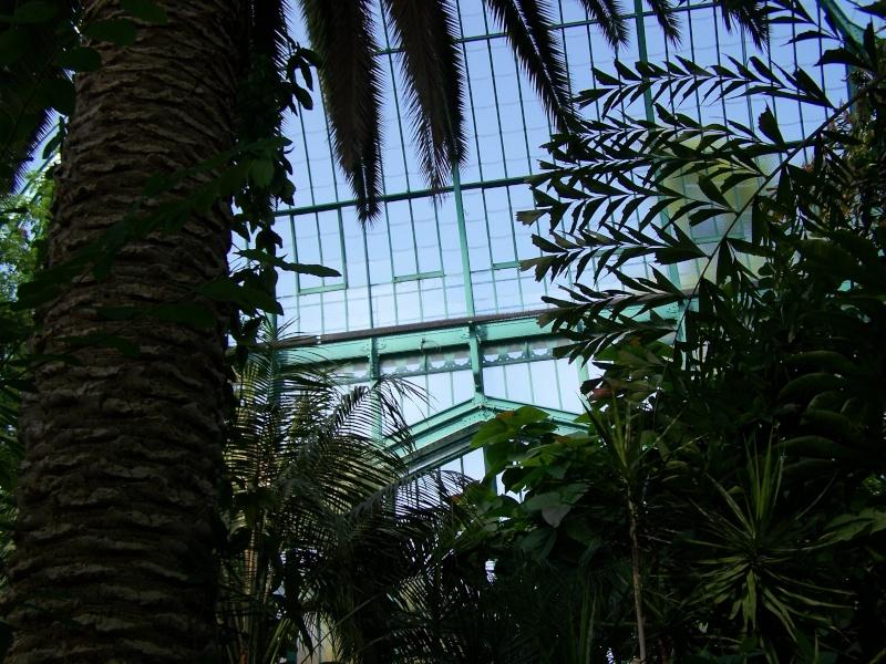 Quelques photos de notre palmarium Palmar13
