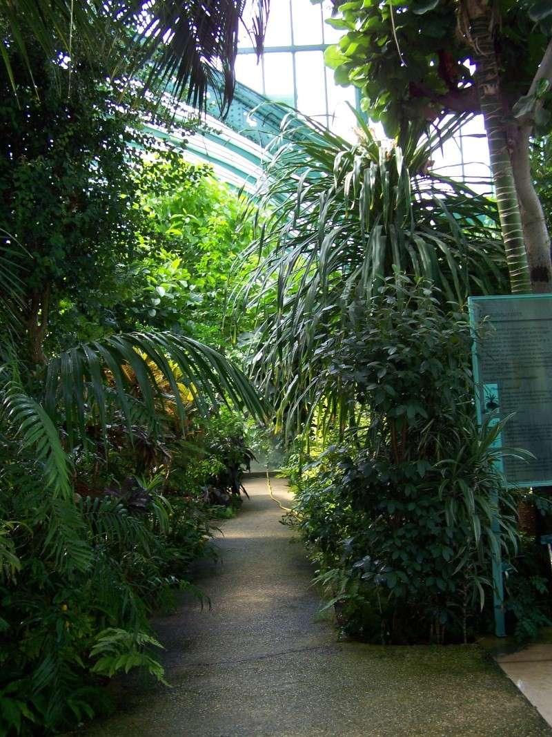 Quelques photos de notre palmarium Palmar14