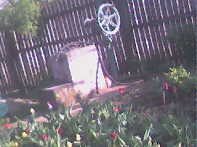 Flori si gradini Dsc00011