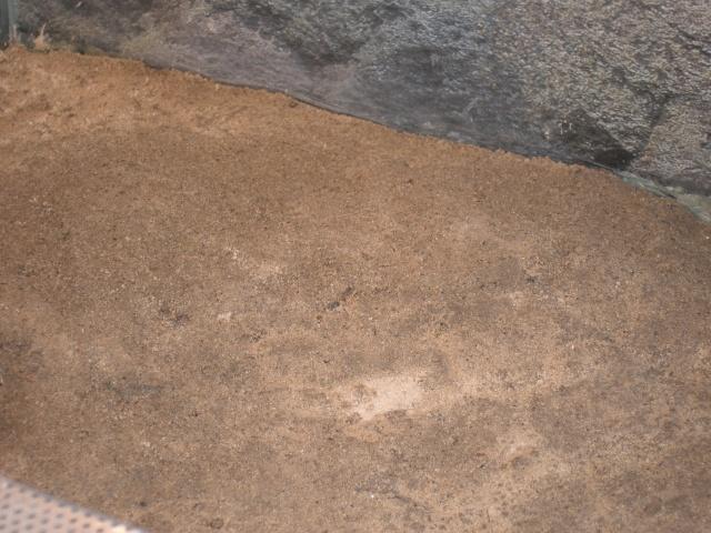 sable d'estuaire P9270211