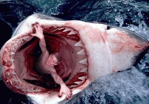 Les requins et vous Copie10