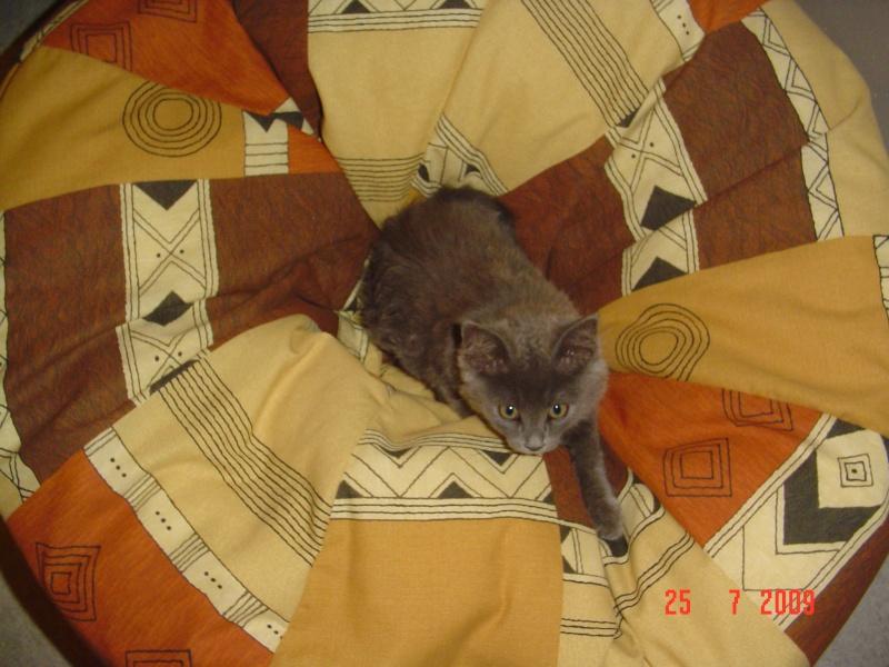 bébé chat ...........de canaille & chabal ! - Page 4 29juil12