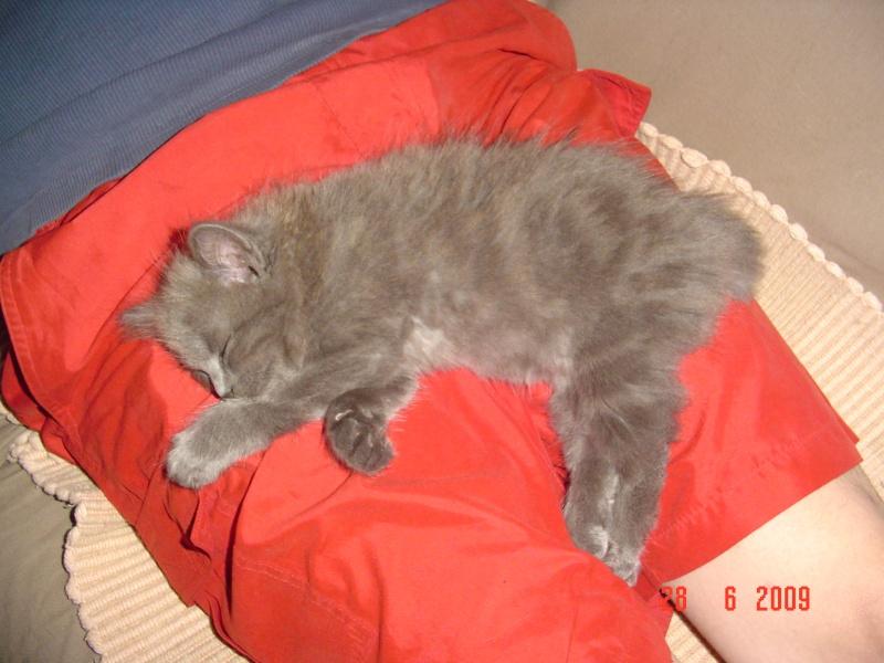 bébé chat ...........de canaille & chabal ! - Page 2 Morpha13