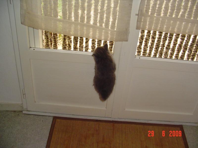 bébé chat ...........de canaille & chabal ! - Page 2 Morpha14