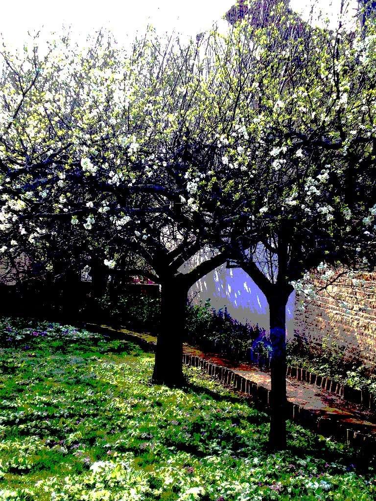 Photos étrange (violet) 04410