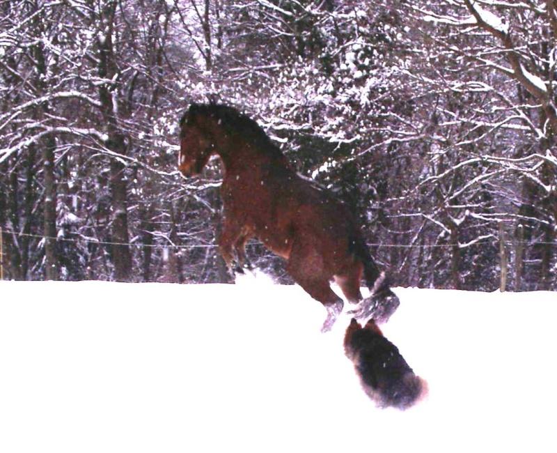 Le cheval et la neige, gagnant : Chris - Page 3 Neige_15