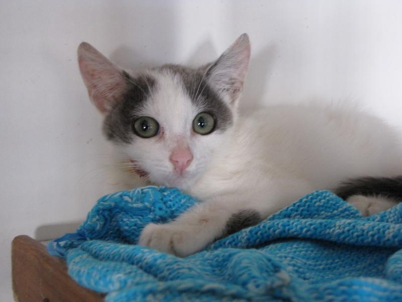 CHARMEUR(chaton blanc et gris) Img_1111