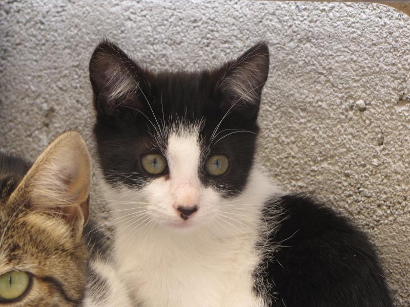 Mindy (chaton noire et blanche)* Img_1628