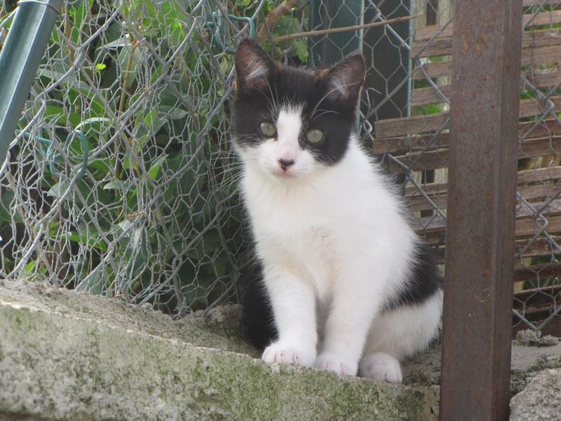 Mindy (chaton noire et blanche)* Img_1629