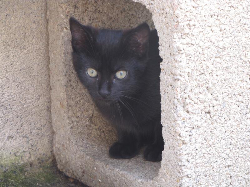 Mamba (chaton noire)* Img_1630