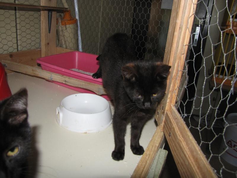 OLIGAN (chaton noir) Oligan10