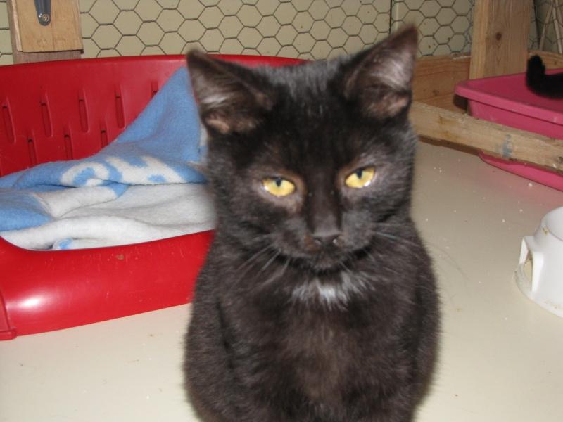 ONIX(chaton noir) Onix10