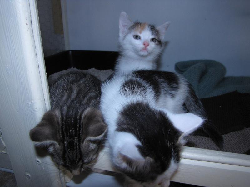 PRALINE  rebaptisée PUNKY (chaton tricolore) Pralin11