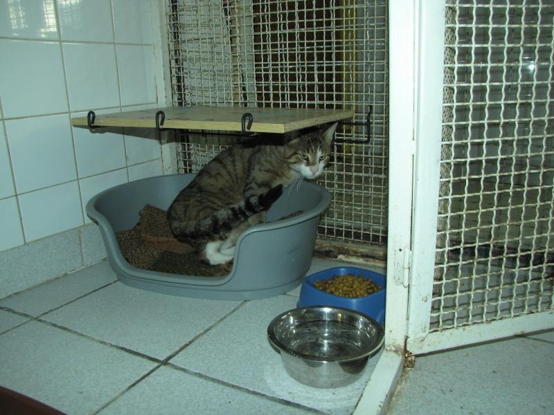 trouvé chat tigré à st germain lembron,SPIROU Spirou12