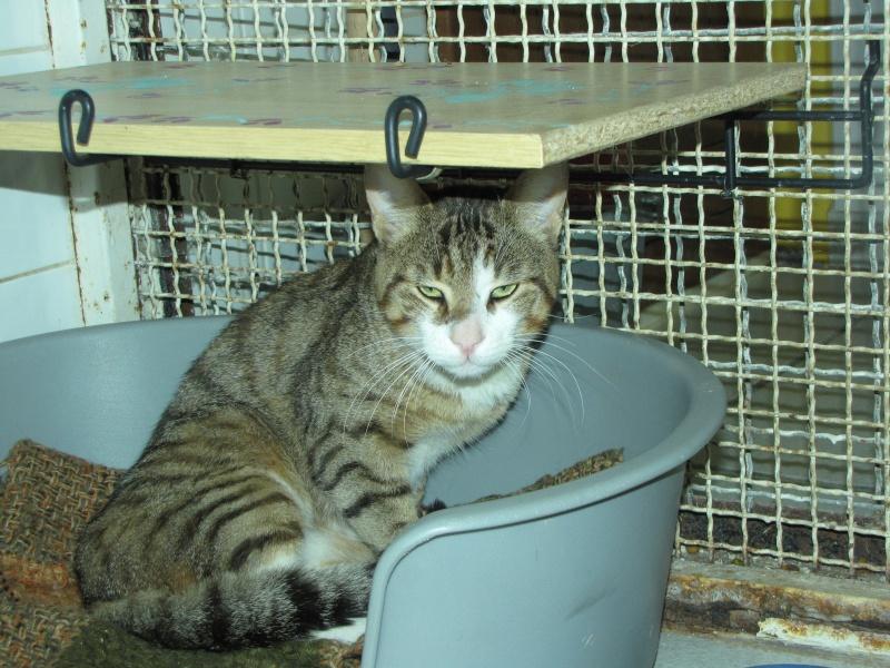 trouvé chat tigré à st germain lembron,SPIROU Spirou13