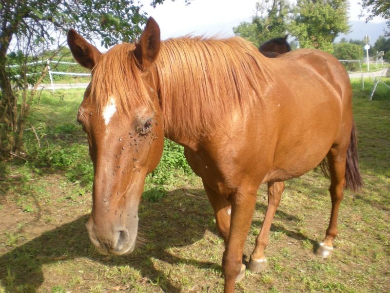 VENUS  jument cheval de selle 22 ans  700e montable - Page 3 Dscn1913
