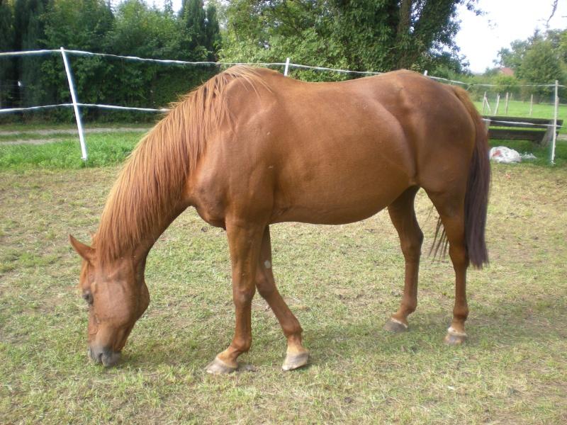 VENUS  jument cheval de selle 22 ans  700e montable - Page 3 Dscn1914