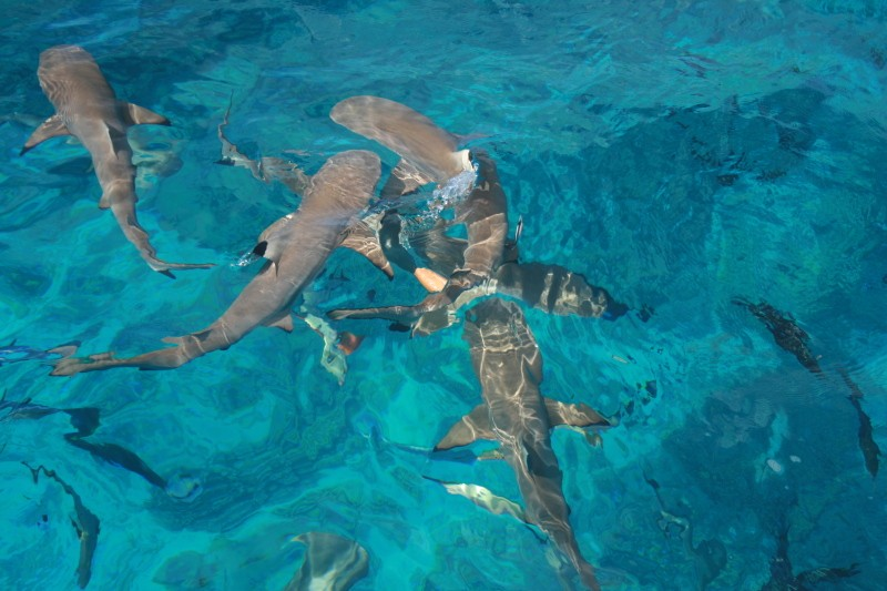 Photos de tahiti, et de ses îles !! Img_0111