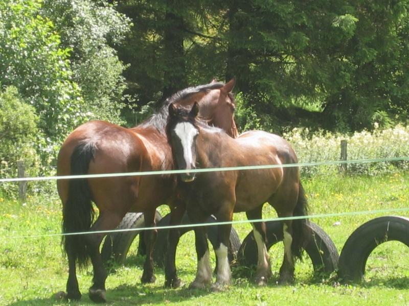 Rando de 5 jours dans les Vosges ...1ères photos ET enfin quelques suivantes Img_0313