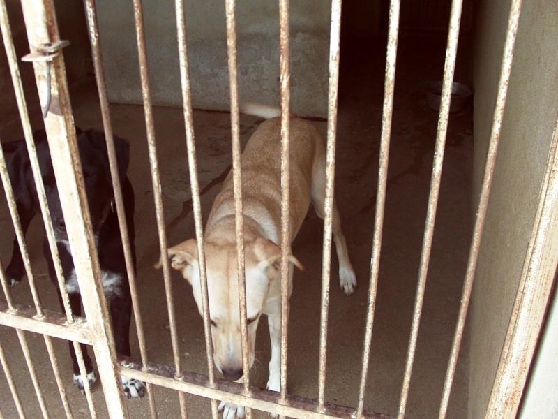 [39] Djina est une femelle labrador croisé Dsc_0163