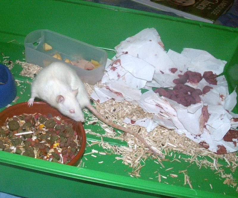 Nos ratoux !!! Pict0111
