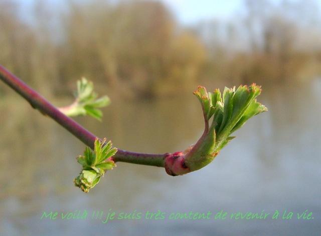 Dans l'attente du printemps ... Les bourgeons - Page 2 01010213