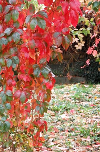 Fotoprojekt - Bäume - Seite 3 Herbst11