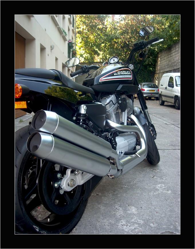 Harley XR 1200 bientot chez moi Harley12