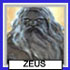 RP Headshots Zeus11