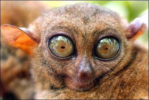 ABBIAMO VINTO IL CASTING  DELLA DE FILIPPI!!! - Pagina 5 Lemure10
