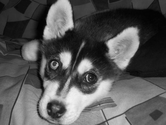 """Concours de la photo de chiens la plus """"belle"""" 100_2714"""