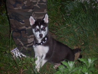 """Concours de la photo de chiens la plus """"belle"""" 100_2715"""