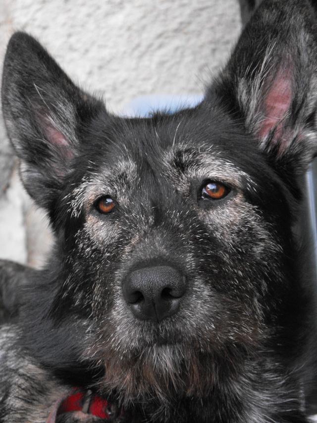 """Concours de la photo de chiens la plus """"belle"""" 2009_011"""