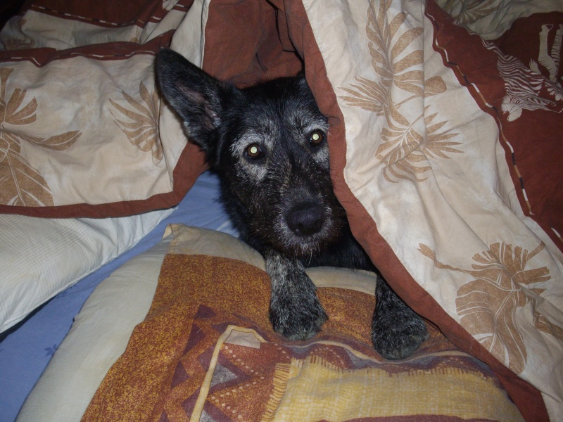 """Concours de la photo de chiens la plus """"belle"""" Imgp1718"""