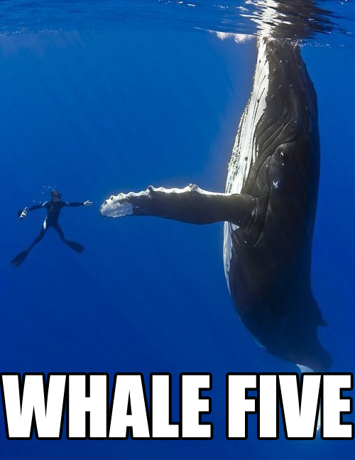 Random pictures thread - Page 2 Whale_10