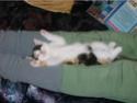Pets and Animals. Miaow! Ziggy111