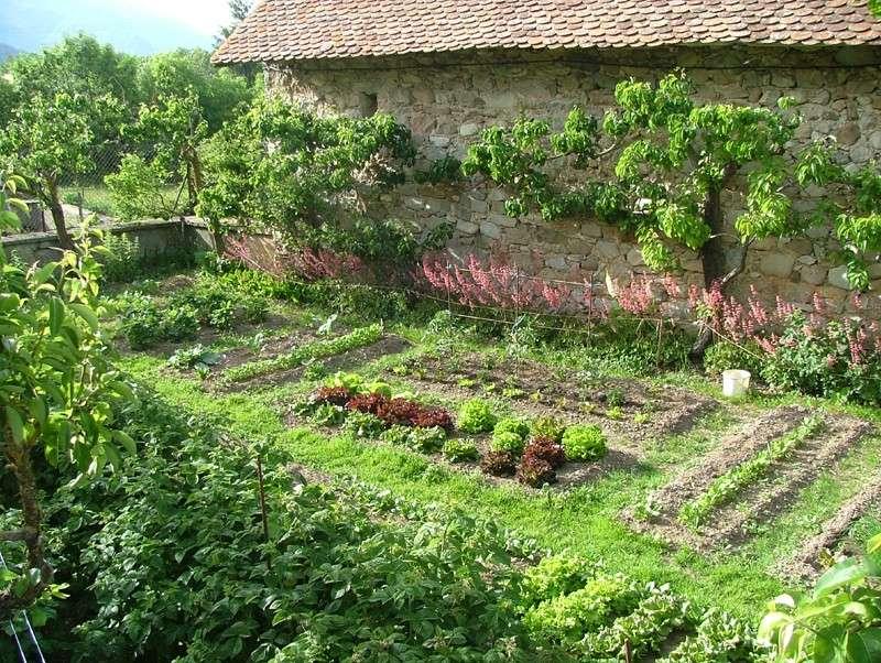 Plantes et Arbustes Jardin10