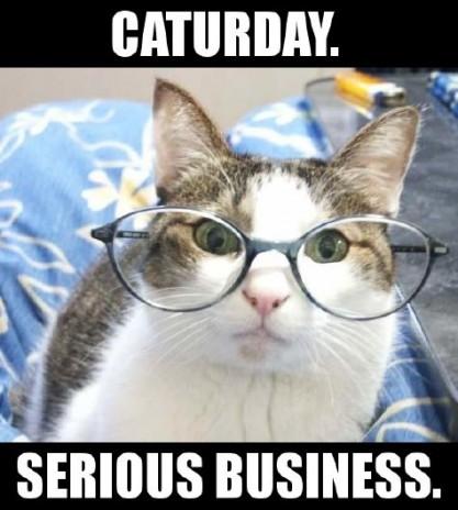 Caturday!!! 11545_10