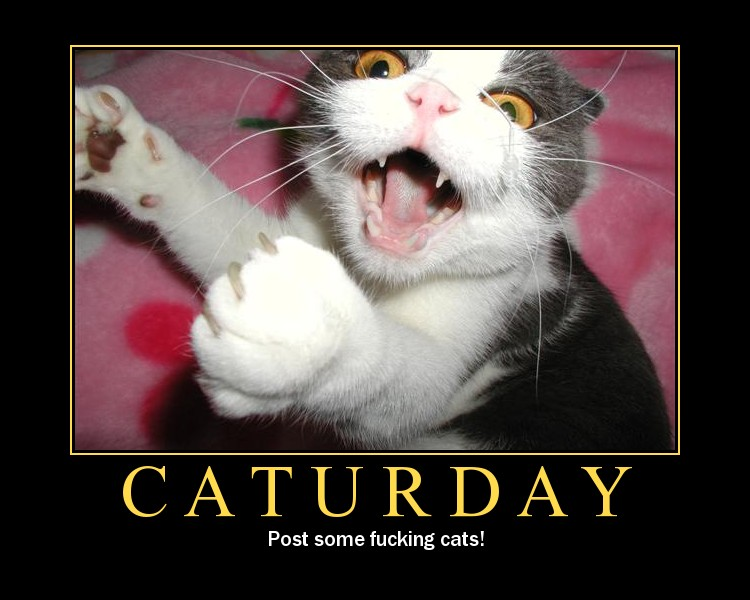 Caturday!!! Caturd10