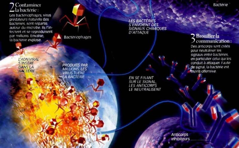 IMAGE SCIENCE ET VIE Untitl10
