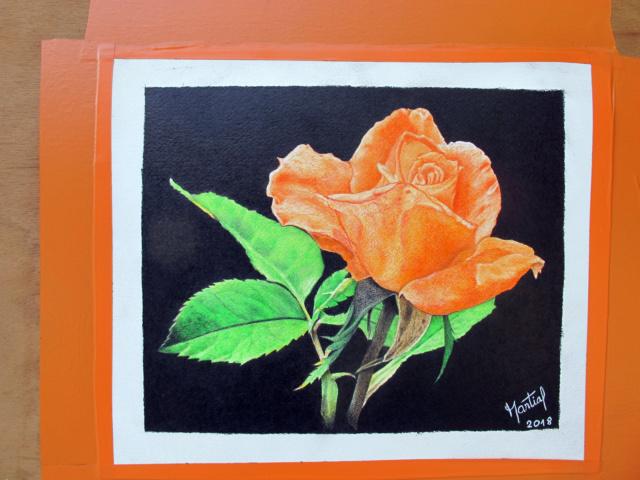 Ros'orange  Rose_o11