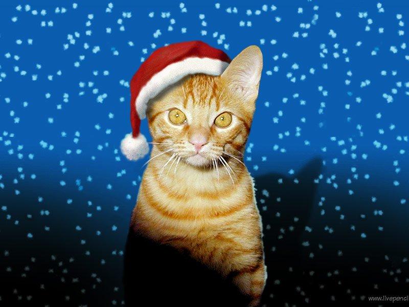 Cher Papa Noël ! Fun_ch10