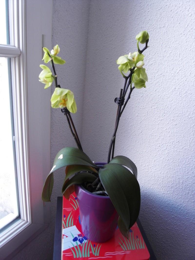 Débutante, orchidées pas en forme... Sdc10512