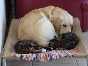 histoire de chiens e de chats 43908410