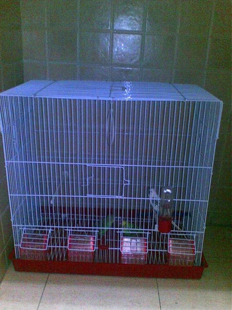 Comment trouvez-vous ma nouvelle Cage ! Image813