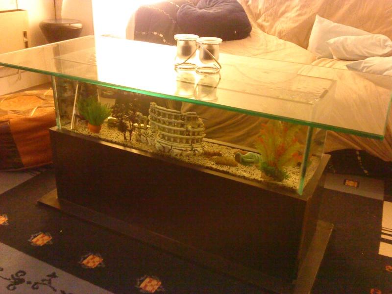 table basse aquarium Dsc00015